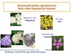ornamental plants reported to be toxic when ingested by humans24