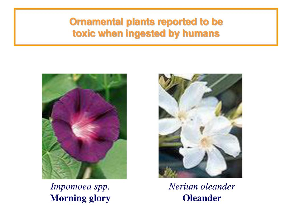 Ornamental plants reported to be