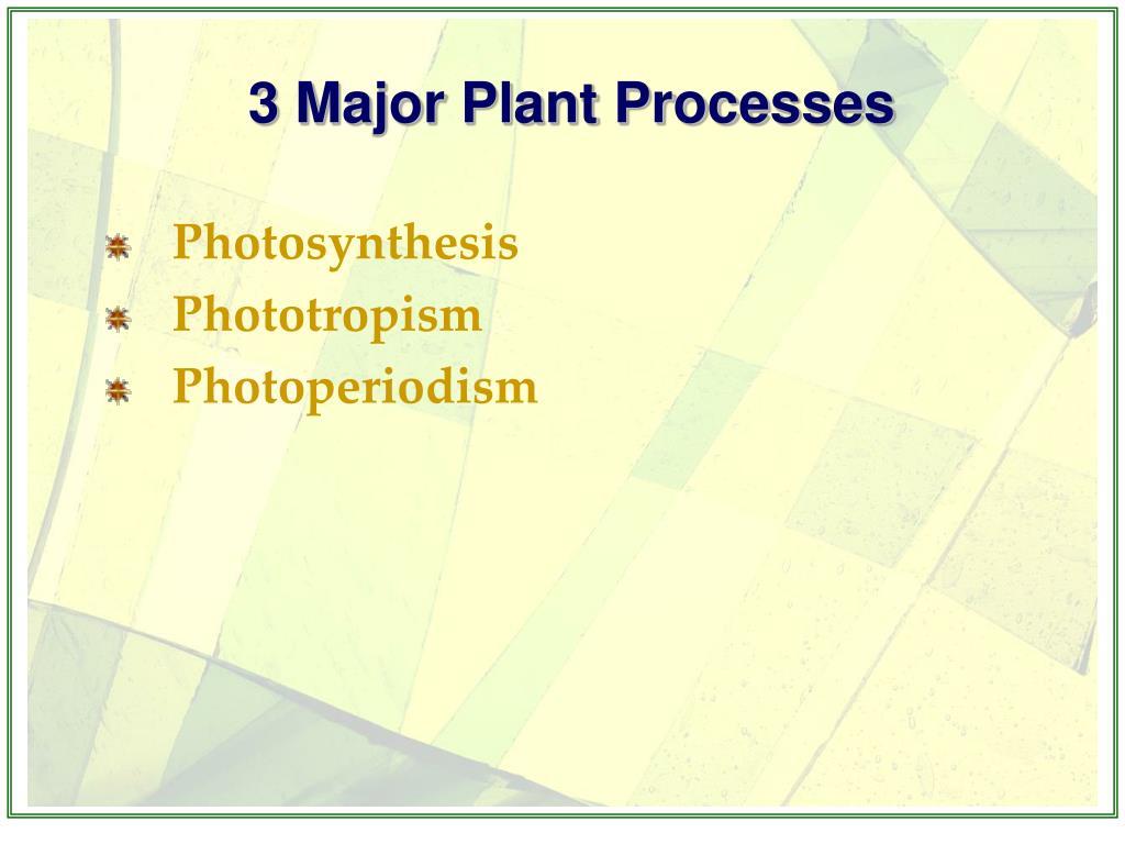 3 Major Plant Processes