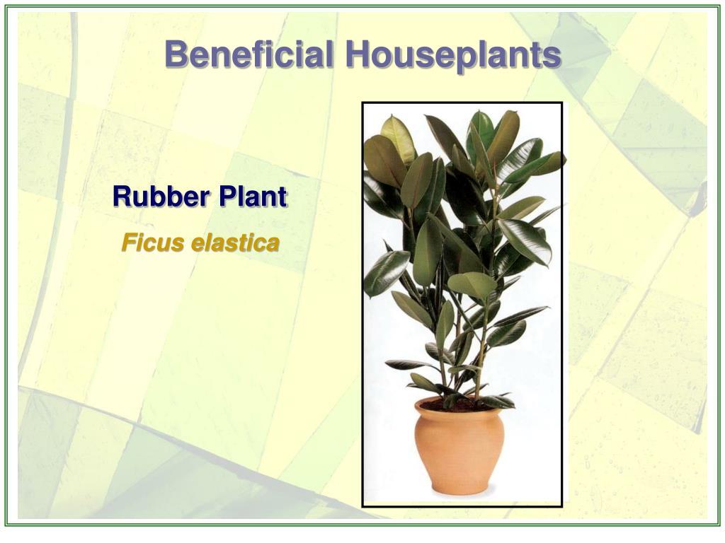 Beneficial Houseplants