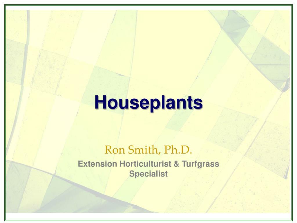 houseplants l.