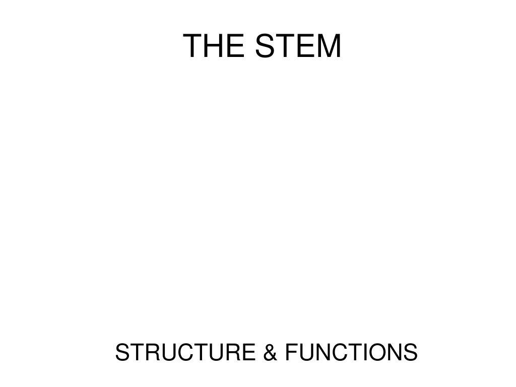 the stem l.