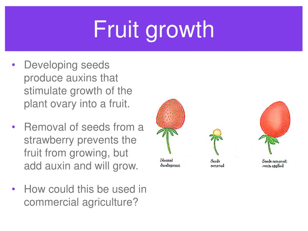 Fruit growth