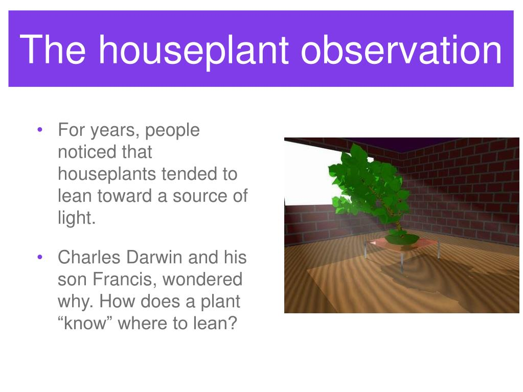 The houseplant observation