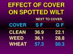 effect of cover on spotted wilt19