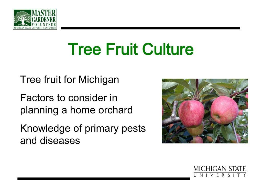 Tree Fruit Culture