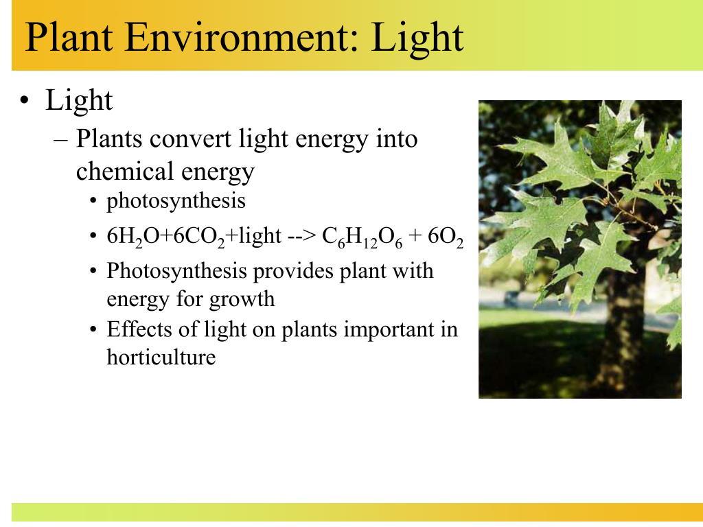 plant environment light l.