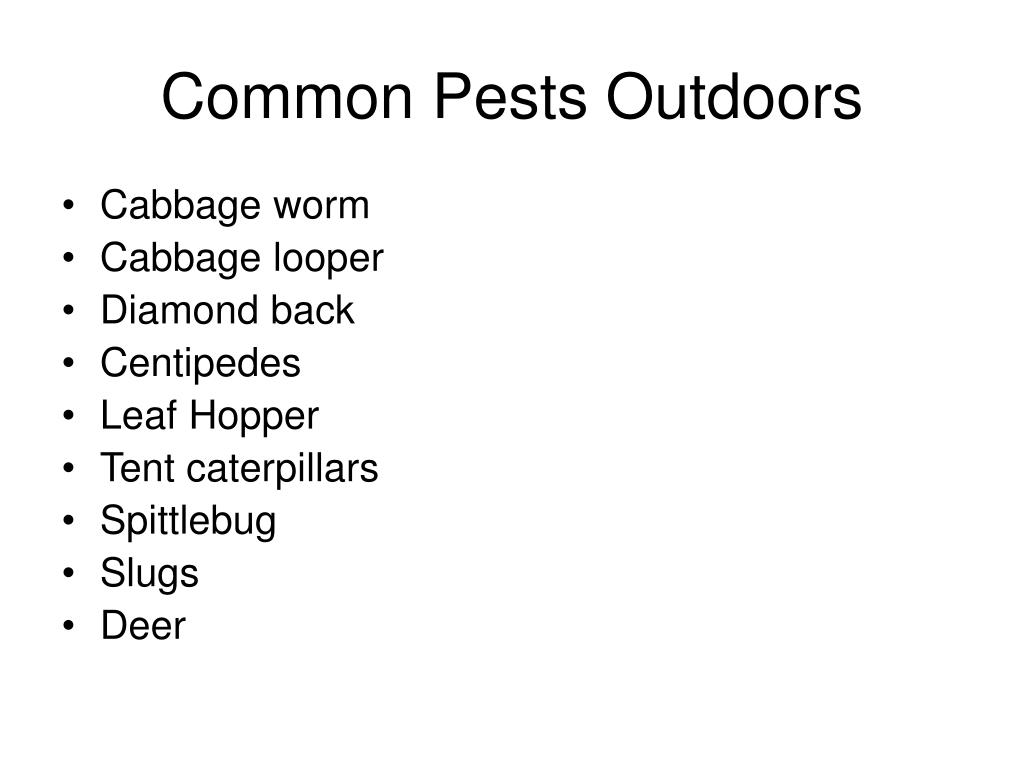 Common Pests Outdoors