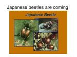 japanese beetles are coming