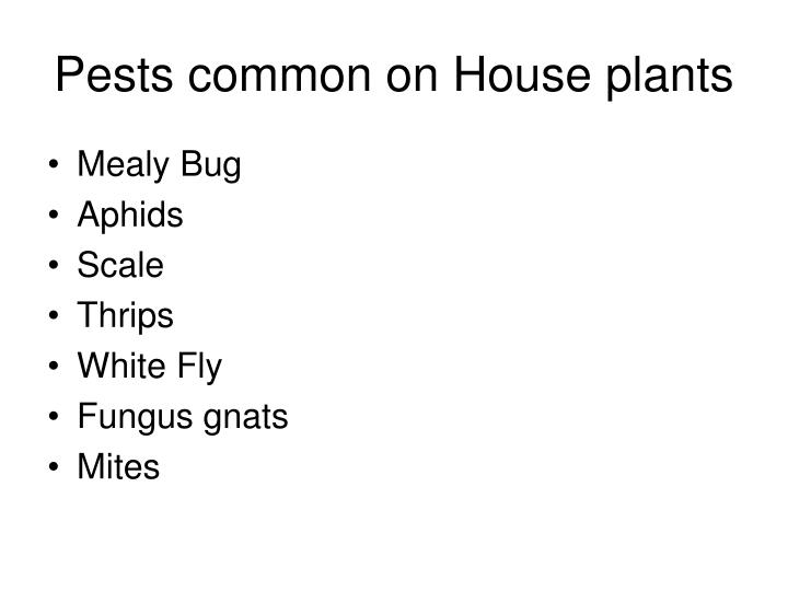Pests common on house plants