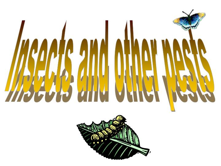 Insects and other pests