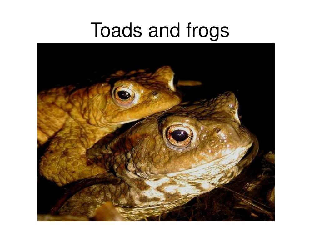 Toads and frogs