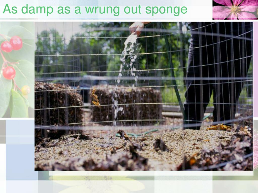 As damp as a wrung out sponge