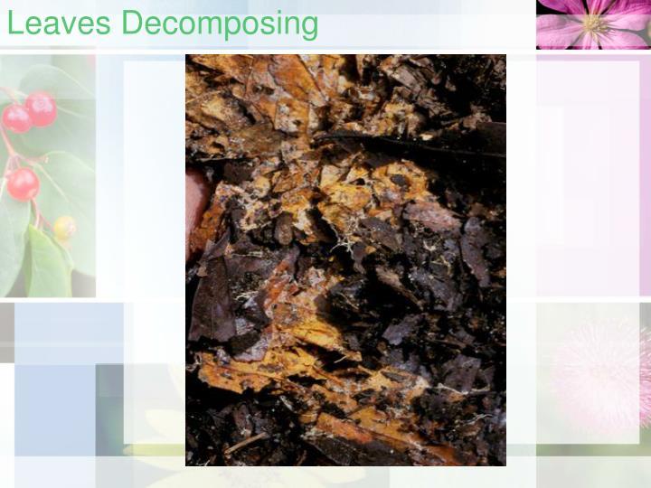 Leaves decomposing