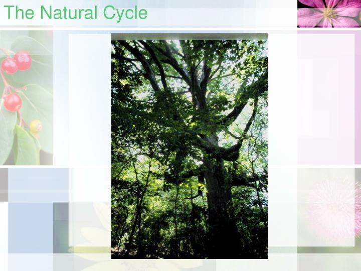The natural cycle