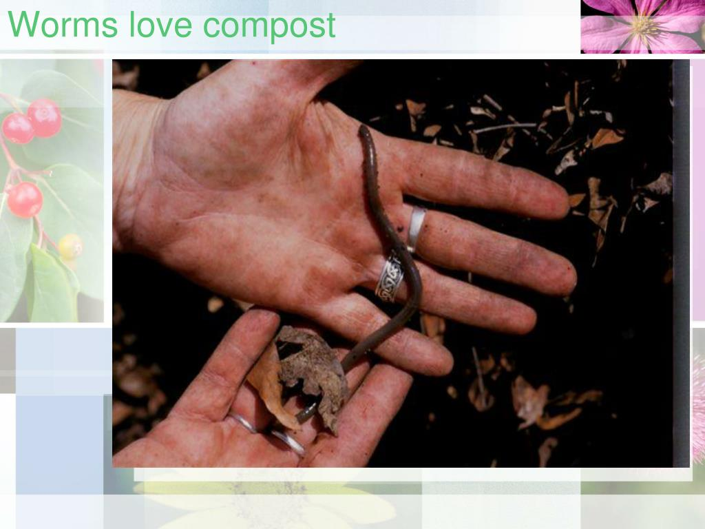Worms love compost