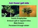family eriophyidae erineum gall or vagrant mites male flowers persistent through winter