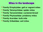 mites in the landscape