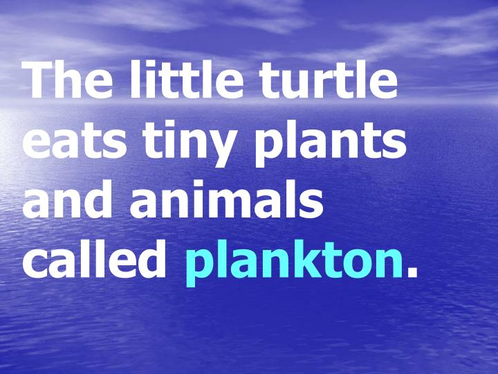 The little turtle eats tiny plants and animals called