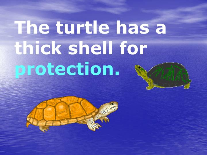 The turtle has a thick shell for