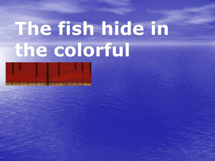 The fish hide in the colorful coral.