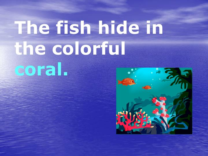 The fish hide in the colorful