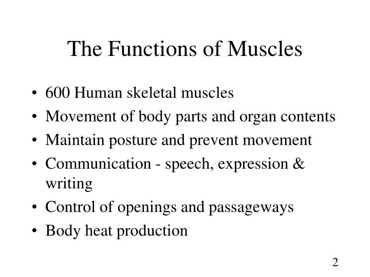 PPT - Chapter 10 The Muscular System PowerPoint Presentation - ID:663309