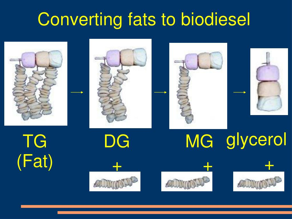 Converting fats to biodiesel