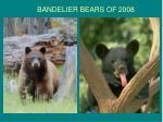 bandelier bears of 2008