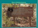 bear climbing lessons