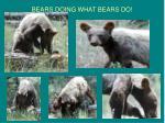 bears doing what bears do