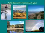what does wilderness mean to you