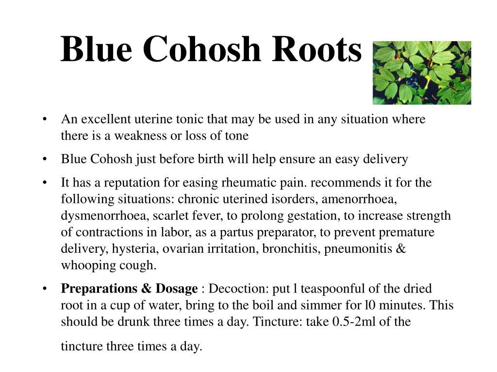 Blue Cohosh Roots