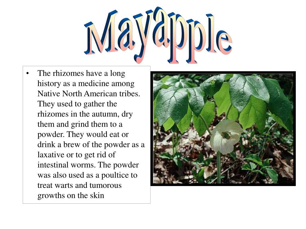 Mayapple