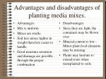 advantages and disadvantages of planting media mixes