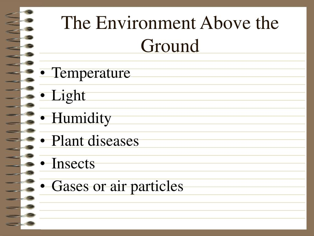 The Environment Above the Ground