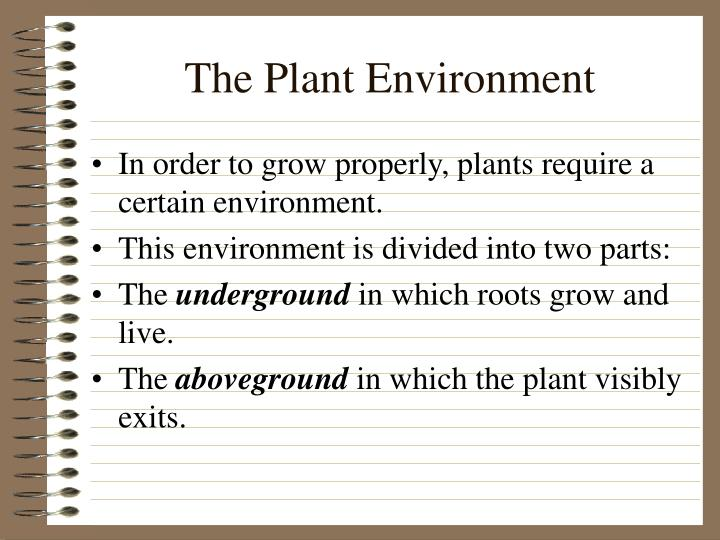 The plant environment
