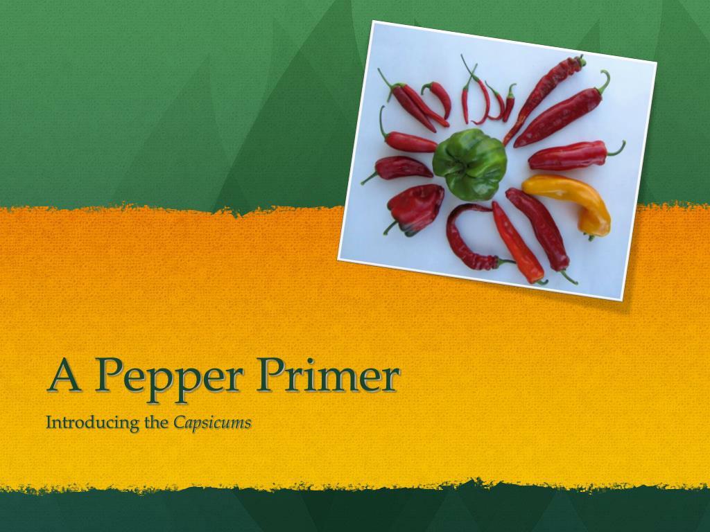 a pepper primer l.