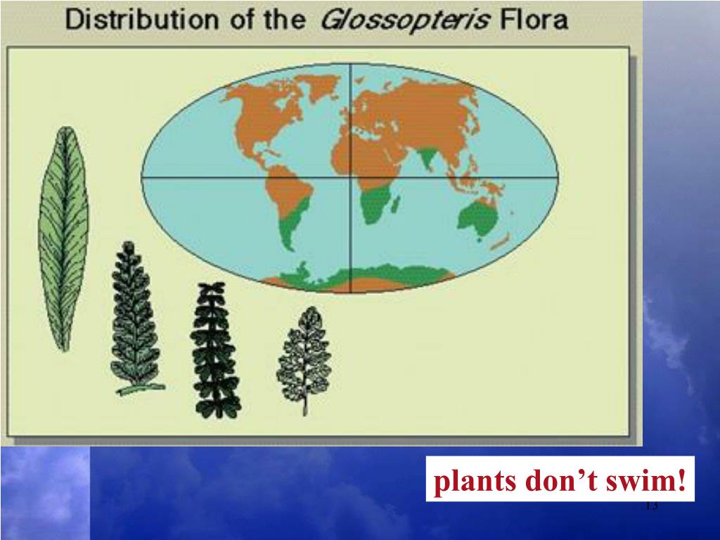 plants don't swim!