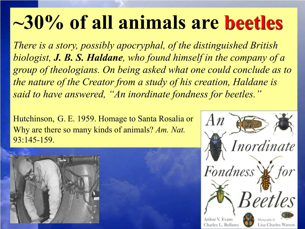 ~30% of all animals are