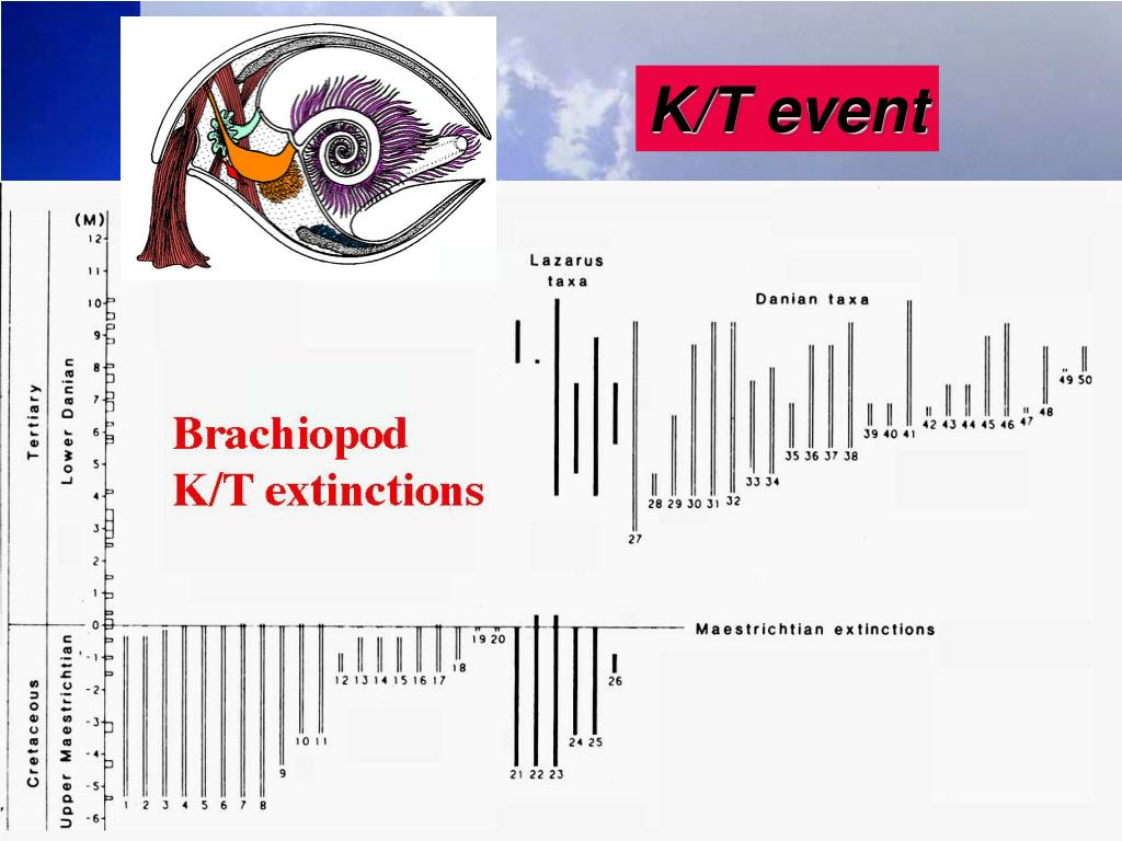 K/T event