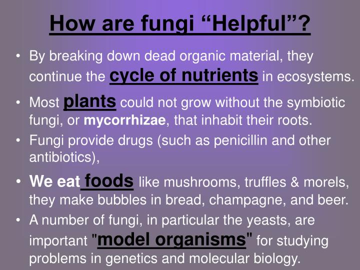 helpful fungi Fungi definition, a plural of fungus see more.