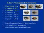 relative abundance of nicrophorinae