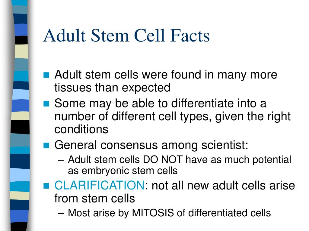 Adult Stem Cell Facts