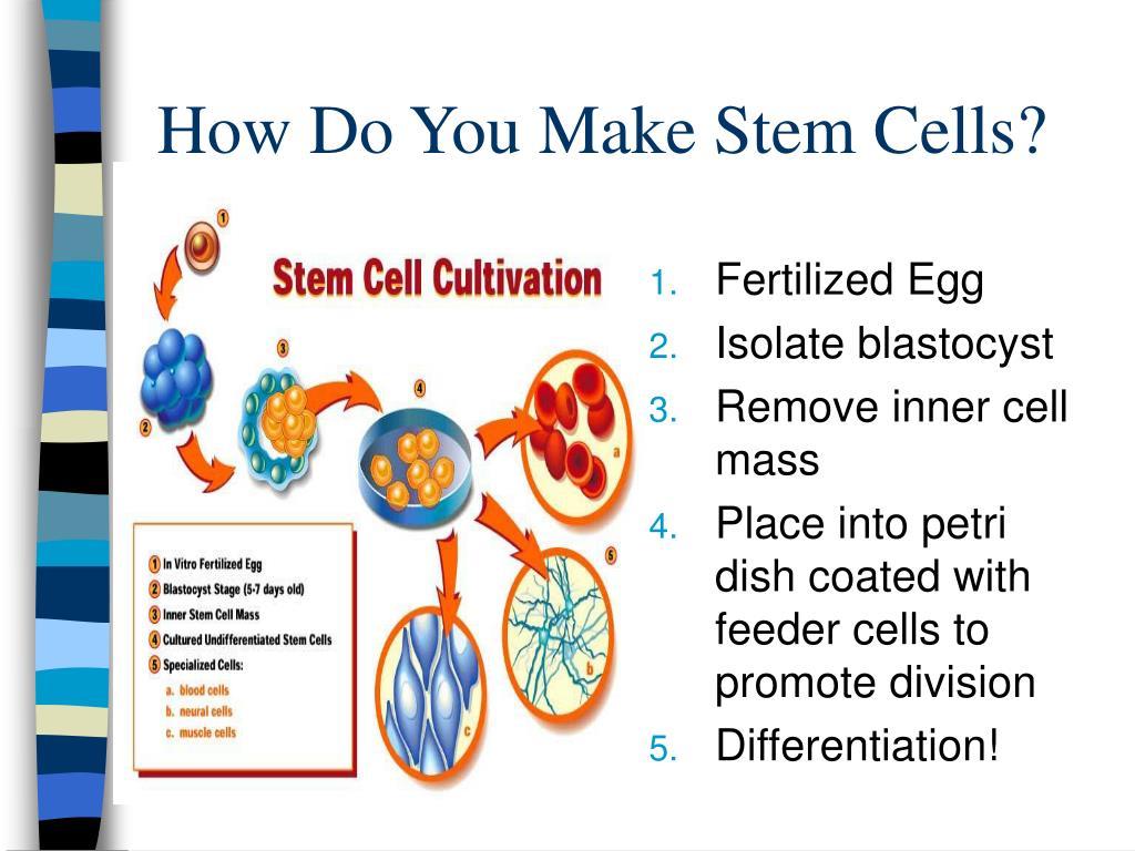 How Do You Make Stem Cells?