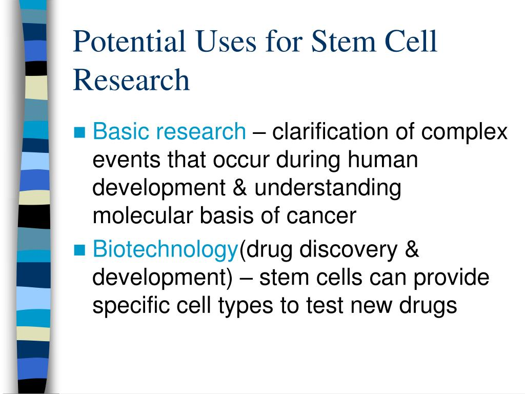 Potential Uses for Stem Cell Research
