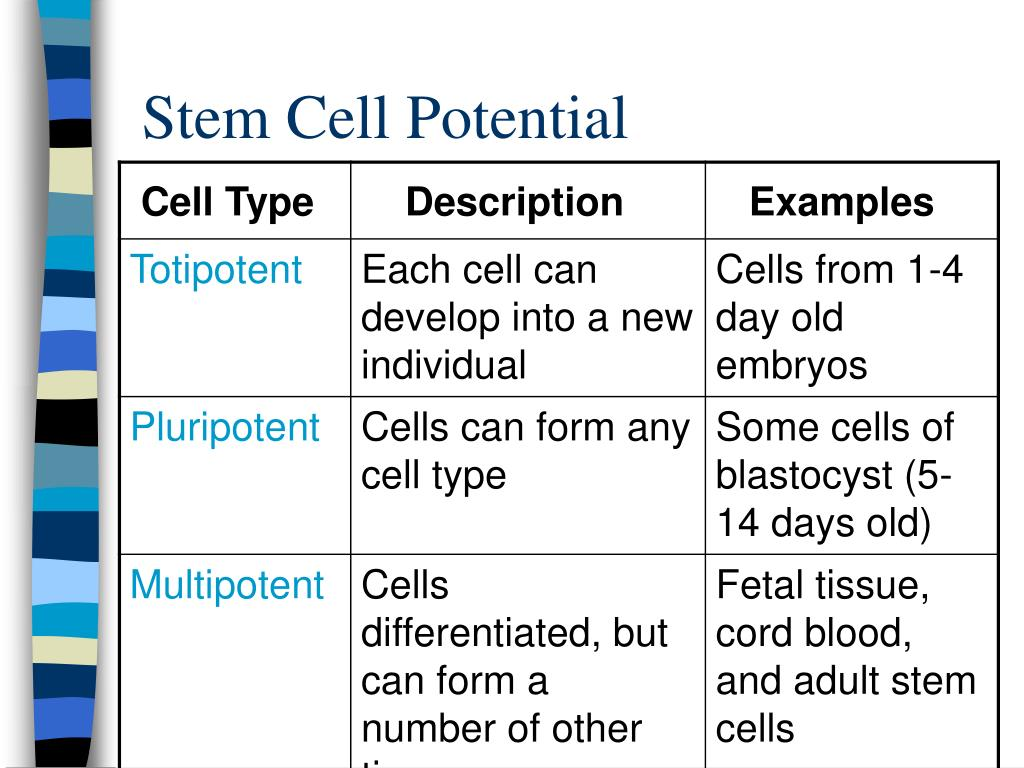 Stem Cell Potential