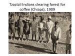 tzoztzil indians clearing forest for coffee chiaps 1909