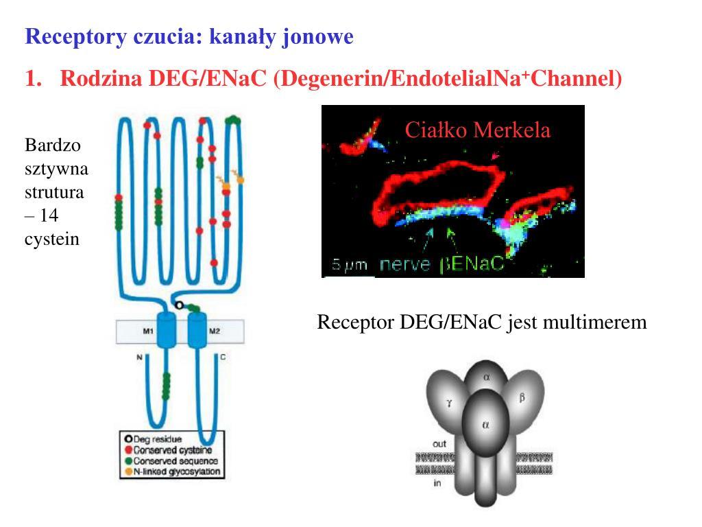 Receptory czucia: kanały jonowe