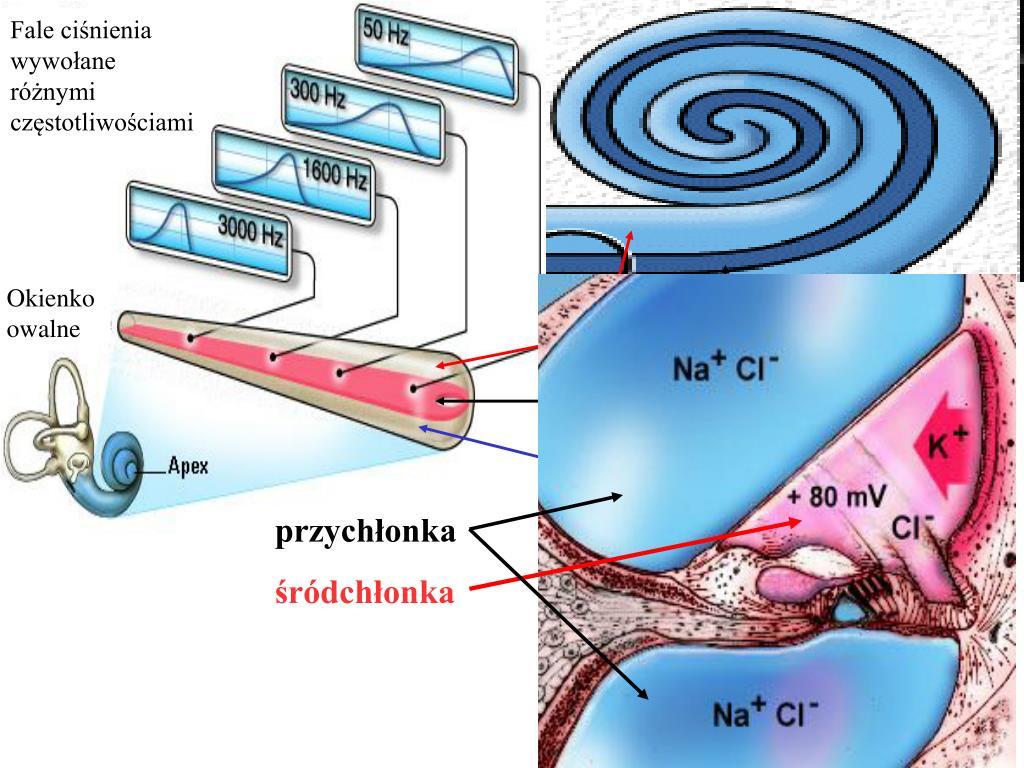 Fale ciśnienia wywołane różnymi częstotliwościami